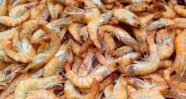 Farm-raised shrimp
