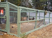 Predator-proof chicken run