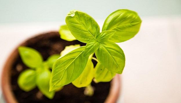 Greener living tips