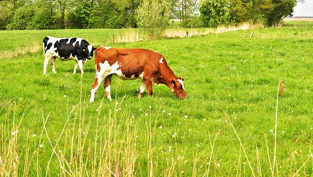 Sustainable grazing livestock practices