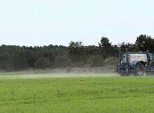 Risks of glyphosate Roundup