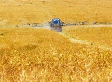 Dangerous pesticide approved for agricultural use