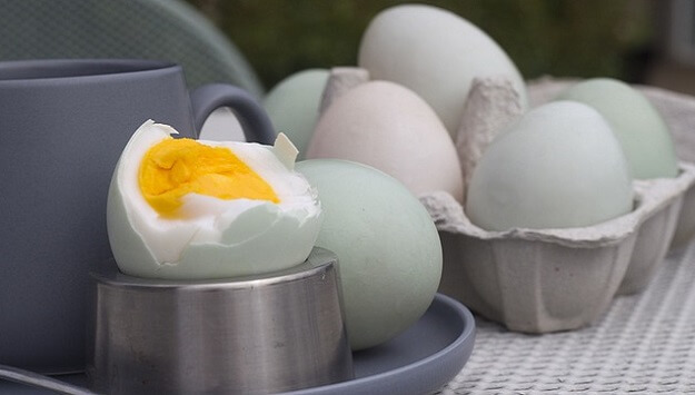 All about duck eggs