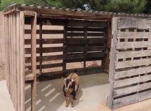 Building a goat house from pallets