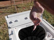 How to make a DIY chicken plucker