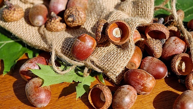 An easy way to process & eat acorns