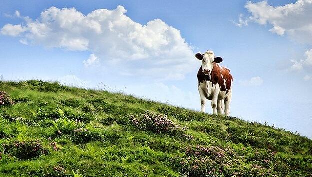 Environmental impact of raising animals