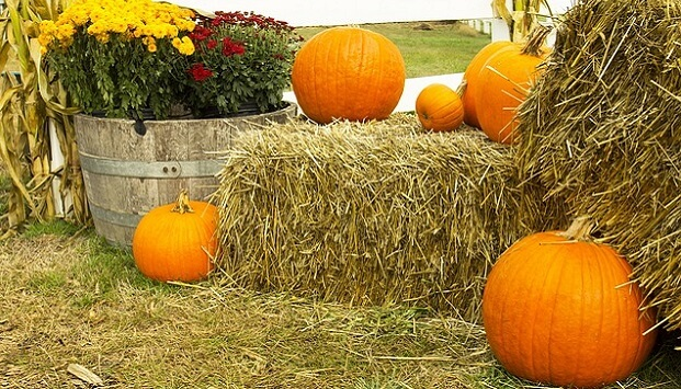 Homestead preparation tips for fall & winter